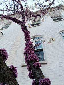 Tree Bark in Bloom