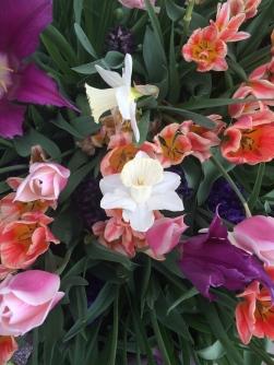 9 Smithsonian Flowers