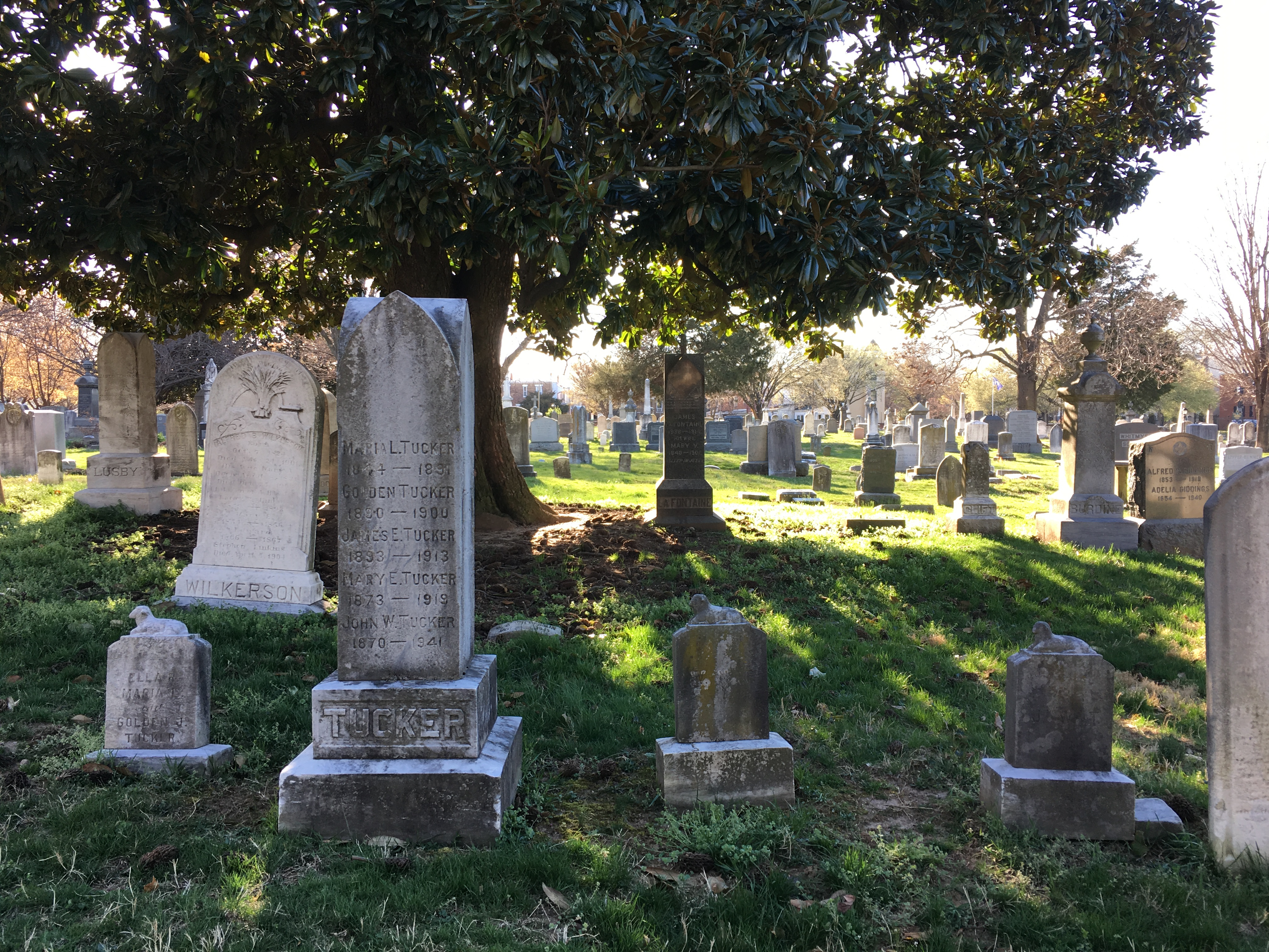 """I call this """"Awesome Cemetery Shadows."""" Nearby, Walt Whitman turned over in his grave at my non-poetic description of this beautiful scene."""
