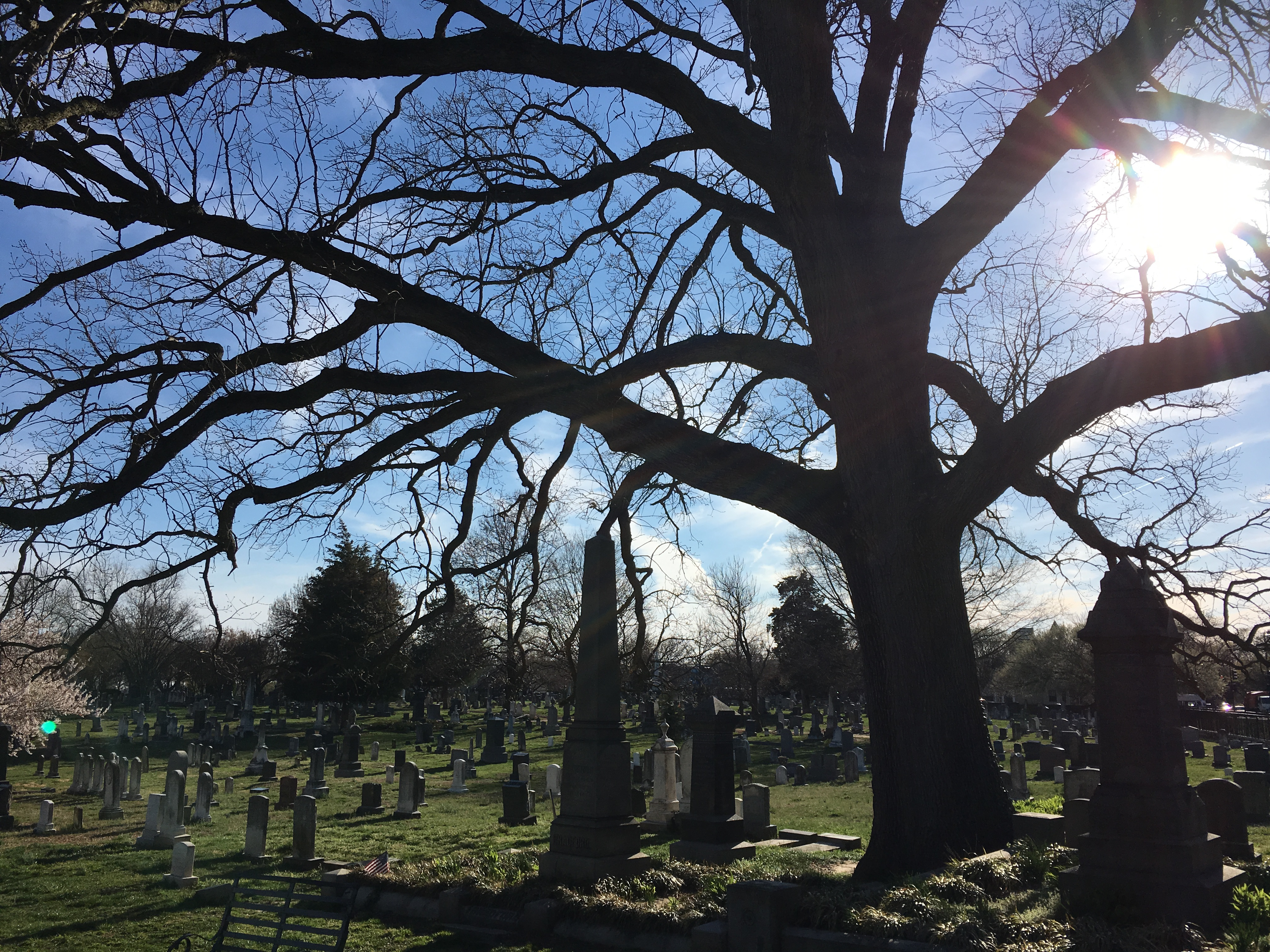 Primo late-afternoon cemetery shadows